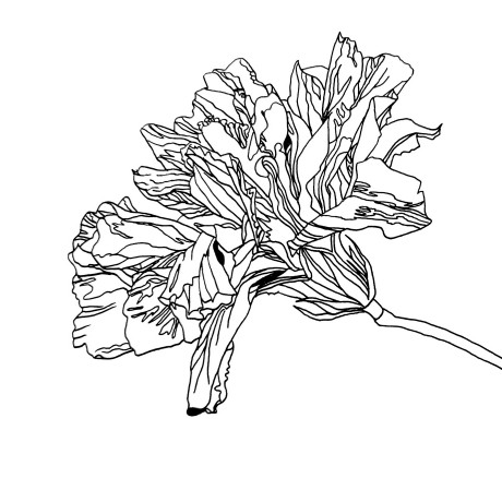 Hibiscus Coloring Page