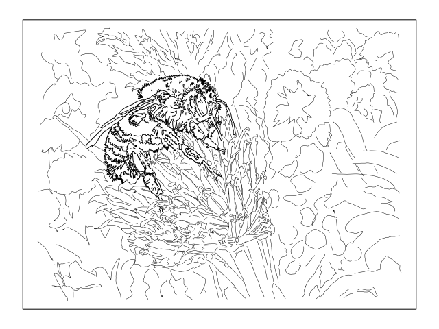 dahlia colouring page images