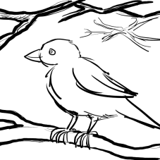 Sparrow with bolder branches