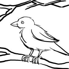 Transparent Background for Digital Colouring